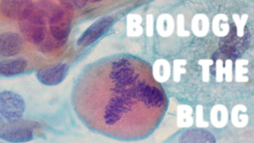 Biology Of The Blog